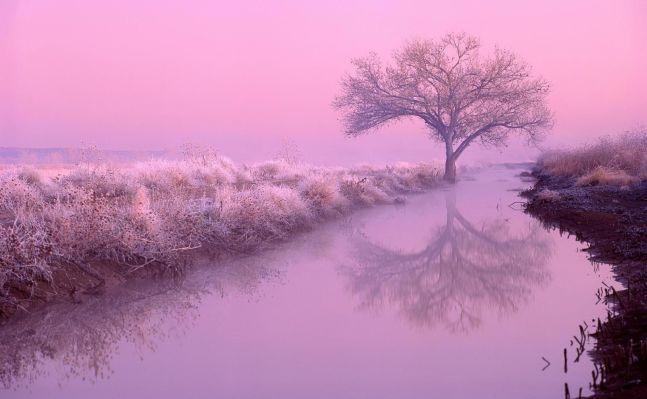 62466-Pink-Nature